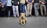 'Lukanikos', el perro antisistema de las protestas griegas. Atenas, mayo 2010. Absolutgrecia.com.