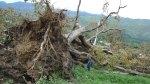 El viejo roble de San Lázaro en San Roque del Acebal (Llanes - Asturias) abatido. 2011.