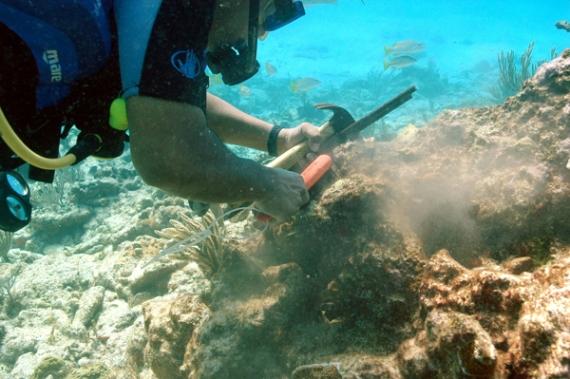 Un buzo repara coral dañado por el huracán Wilma a lo largo de la costa de México. Fuente: Anca24.canalazul24.com.