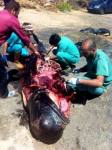 El plástico de usar y tirar es la causa de miles de muertes entre aves y peces. 2013. Rtve.es.