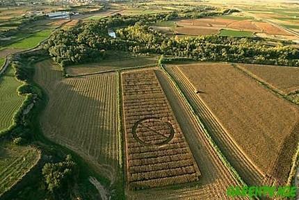 Campo de maíz transgénico en Cataluña marcado con una enorme señal de prohibición por activistas de Greenpeace. 2009. Fuente: greenpeace.org.
