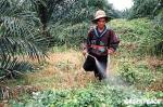 El glufosinato es un pesticida considerado peligroso para la salud humana. 2009. Geenpeace.org.