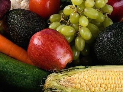 Hoy día resulta prácticamente imposible, a simple vista, diferenciar un producto agrícola transgénico de otro que no lo es.