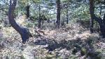 Imagen de denuncia del abandono del bosque en los Montes Aquilianos, con restos de poda abandonados en un pinar cercano a la Aquiana. 31 mayo 2009. Fuente: unecologistaenelbierzo.wordpress.com. Foto: Enrique L. Manzano.