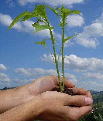 Día Mundial del Medio Ambiente. 2007. Wikipedia.org. Foto: Danilo Prudencio Silva.