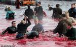 Una orgía de sangre que se justifica con el pretexto de convertir a los más jóvenes en hombres 'hechos y derechos'. Islas Feroe (Dinamarca). 2009. Foto: Iail-alsahare.com.