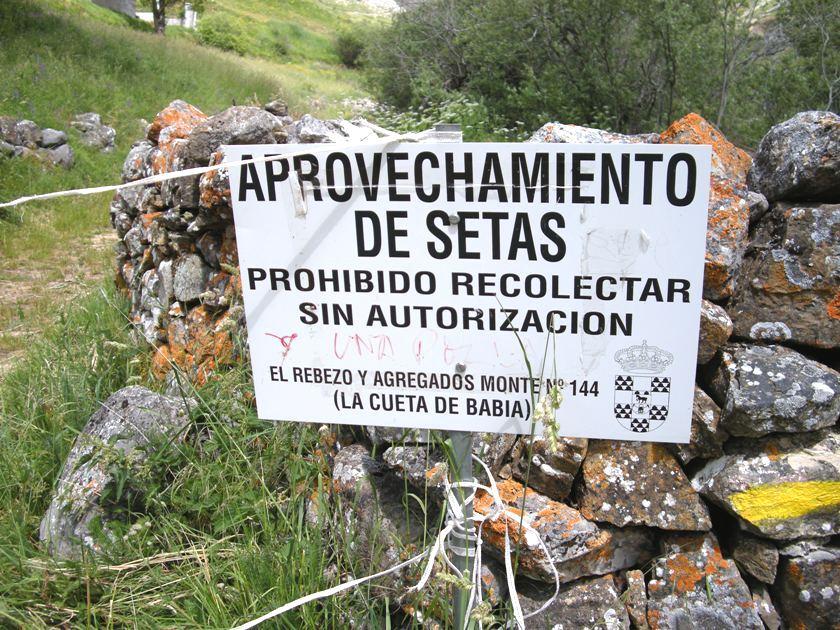 Un cartel nos recuerda la prohibición de recoger setas. La Cueta de Babia (León). 6 jul. 2008. Foto: Enrique L. Manzano.