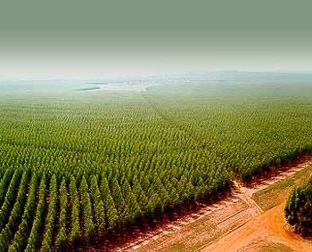 Un 'desierto verde'. 2009.