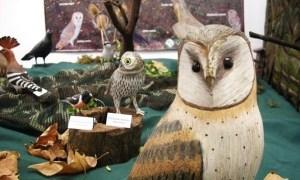 Exposición fotográfica de Tyto alba en Ponferrada. 16 - 29 sept. 2009. Fuente: unecologistaenelbierzo.wordpress.com. Foto: Enrique L. Manzano.