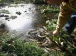 Cientos de truchas murieron por el vertido de los lodos de la presa del Real. Fuente: diariodeleon.es.