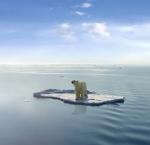 El oso polar corre un serio riesgo de extinción si desaparece su hábitat natural.