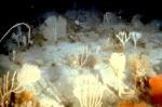 Fondo marino de corales. 2010. Fuente: Oceana.org.