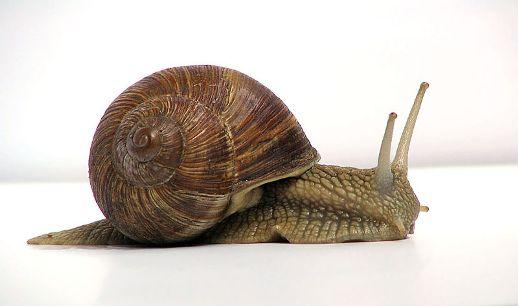 El caracol como símbolo del decrecimiento. 23 mayo 2005. Foto: Jürgen Schoner.