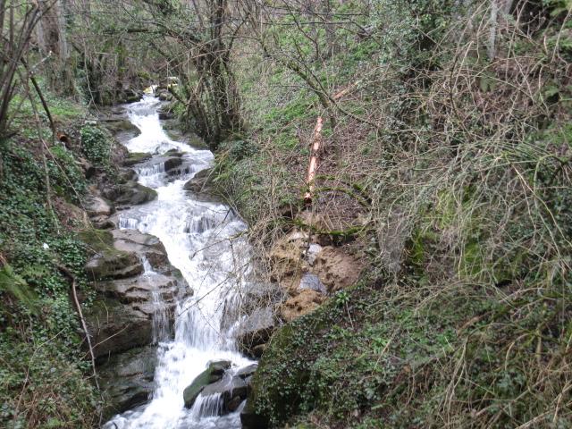 Vertido de purines al arroyo del Valle de Murias, en Somiedo ( Asturias). Fuente: CEA.