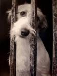 No al maltrato animal. Taringa.net.