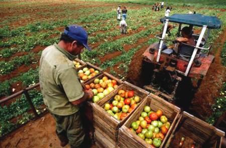 Trabajadores en una cooperativa agrícola. 2012. Centinelaeconomico.com.