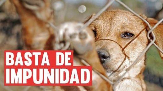 Ciberacción contra el maltrato animal. 'Basta de impunidad'. 25 sept. 2014. Change.org.