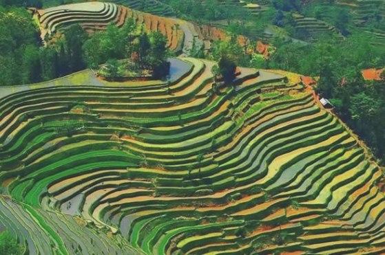 Cultivo campesino en terrazas. Sudamérica. Fuente: ecocosas.com.