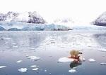 El cambio climático está provocando el deshielo del Polo Norte, poniendo en peligro la supervivencia del oso polar.  Fuente: eluniversal.com.