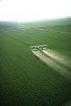El uso de plaguicidas, herbicidas y fertilizantes, así como nuevas variedades de cultivos de alto rendimiento creció en las décadas después de la II Guerra Mundial. Wikipedia.org. Foto: Charles O'Rear.