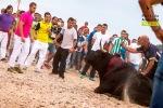 Muerte de 'Elegido'. El Toro de la Vega. Tordesillas, 16 sept. 2014. Pacma.org.