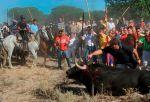 Muerte de toro. Tordesillas, 14 sept. 2010. Pacma.es.