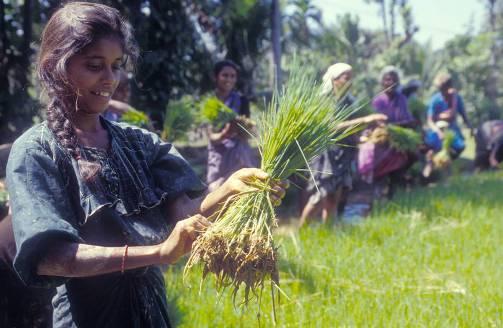 Para erradicar el hambre se debe dar prioridad a los agricultores familiares. 14 sept. 2014. Fuente: fao.org.