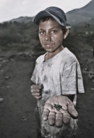 Un 'niño esmeralda' de Musa. Fuente: Anca24.