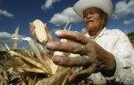 Las semillas del campesino son dignidad, cultura y vida. Rencooks.wordpress.com.