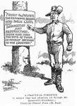 Viñeta dedicada al presidente Roosevelt y a su política conservacionista de la naturaleza. 1908. St. Paul MN Pioneer Press.