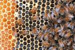 Exijamos la retirada del mercado de los pesticidas tóxicos para las abejas. Csmonitor.com.