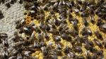 Los pesticidas afectan al sistema nervioso de las abejas, provocándoles, incluso, la muerte. Abc.es.