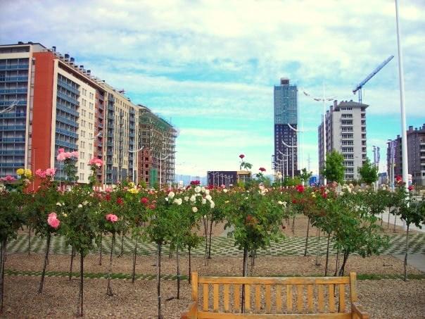 Los rosales que dieron nombre al barrio de La Rosaleda. Ponferrada, 2008.