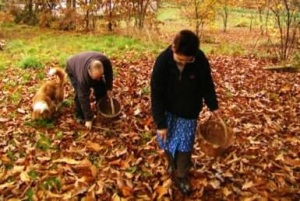 Camilo, Dolores y Rambo recogiendo castañas en Galicia. 2010. Fuente: rtve.es.