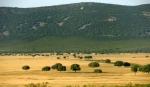Parque Nacional de Cabaneros Castilla la Mancha). Turismocastillalamancha.es.