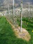 Uso del glifosato como alternativa de control de la cobertura vegetal en la línea de cultivo en un monte frutal de manzanos en Ciardes, Italia, 19 abril 2009. Wikipedia.org.