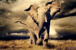 Esta magnífica imagen  de un elefante podría tener los días contados. 2015. Elecodelbierzo.com.