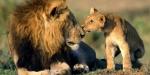 Avaaz exige mayor protección para los grandes felinos. Agosto 2015. Avaaz.org.