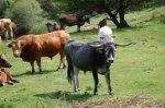 Ecobierzo reclama la atención de las administraciones para el sector ganadero. 2010.