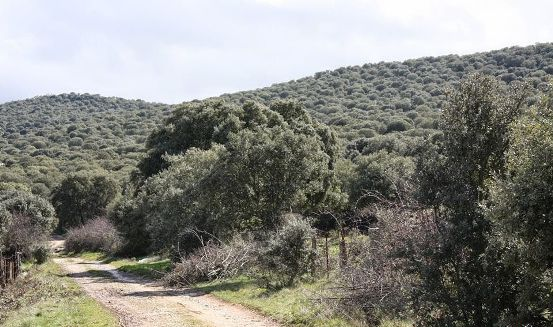 El paraje del Monte de la Mora en Las Veguillas (Salamanca). 2015.