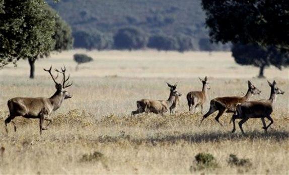 Imagen tomada en el Parque Natural. 2015. Palenciactiva.com.