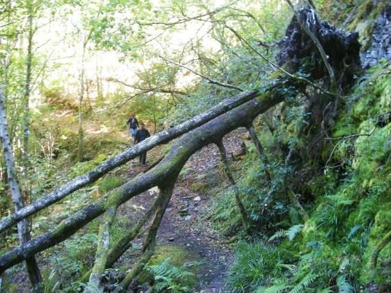 Muy cerca del inicio del bosque de Muniellos. 26 sept. 2010. Foto: Enrique L. Manzano.