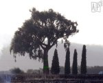 Xardón do Perouchín. Una propuesta de Af2. Cinta elástica y quitavientos arbóreo. 2012. Af2.