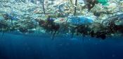 Imagen del Programa de Desechos Marinos de la NOAA. Marzo 2016. Avvaz.org.