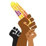 Logo. Lucha de los campesinos mexicanos contra el maíz transgénico. httpgustavoduch.wordpress.com.