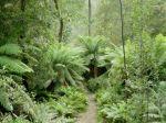 Un bosque en Tasmania. Fuente dhpedia.wikispaces.com.