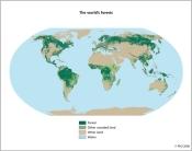 Distribución actual de los bosques en el mundo. 2006. Fao.