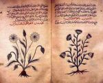 Guía árabe de plantas medicinales. Fuente Noticiasdeabajo.wordpress.com.