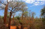 Un bosque en Madagascar. Fuente dhpedia.wikispaces.com.